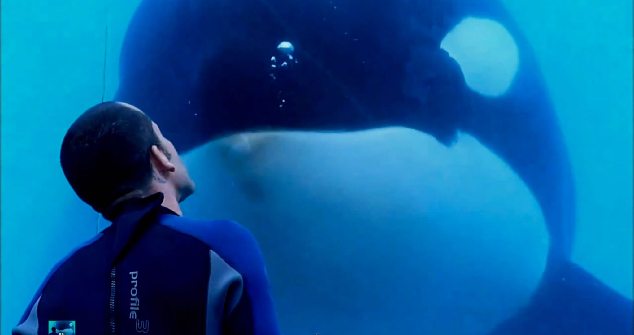 film review blackfish 2013 film blerg